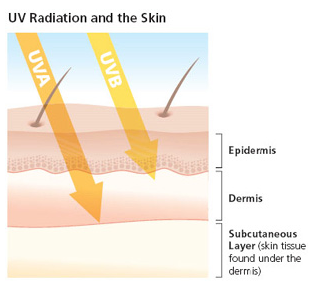 http://www.skincancer.org/prevention/uva-and-uvb