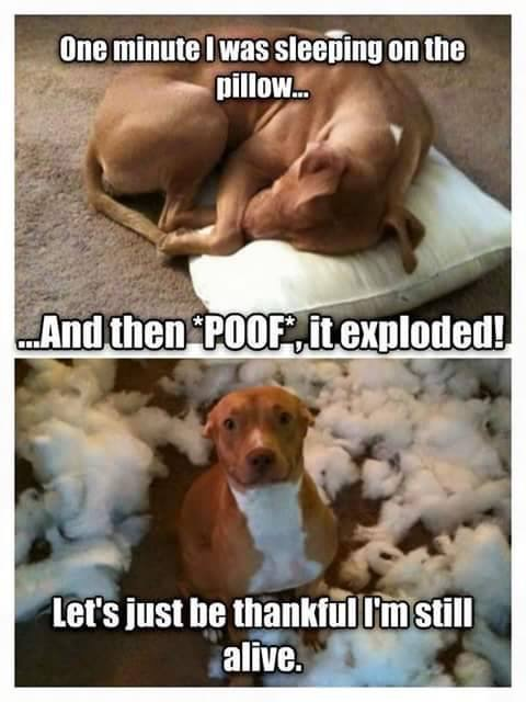 Dog Humor It Exploded Fashionjitsu